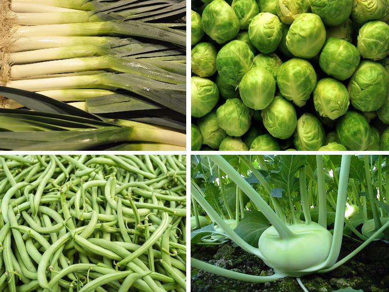 verschiedene Gemüse-klassisch | vonMich